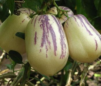 8种营养果最适合在春季吃 再不吃就晚了