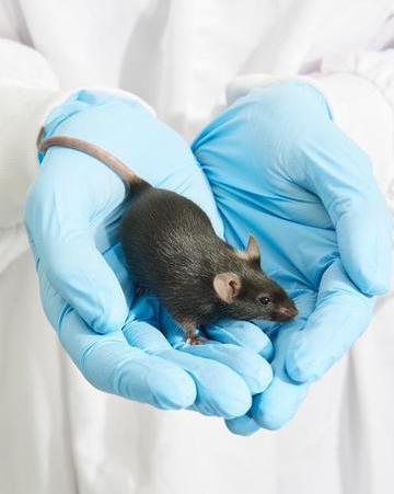 科学家想用基因编辑消灭入侵物种
