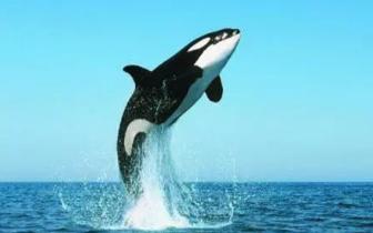 壮观!约12米长的鲸鱼出没涠洲岛海域