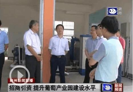 副市长邓应军调研公安县葡萄产业园建设情况