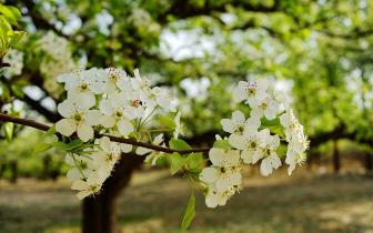 又是一年赏花时 太原最全踏春赏花地图看过来