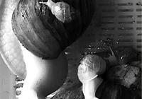 """一小学生将蜗牛养到四代同堂 送蜗牛就像嫁""""女儿"""""""