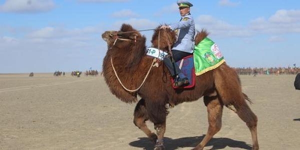 蒙古边防军还在使用马和骆驼