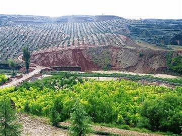 """西樵新增造林绿化逾8500亩 助力佛山""""创森"""""""