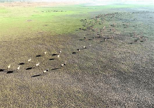 图文:麋鹿家园扩容8000亩