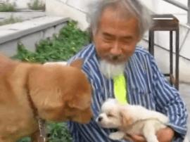 深圳大爷为收养20条流浪猫狗 放弃租房睡广场俩月