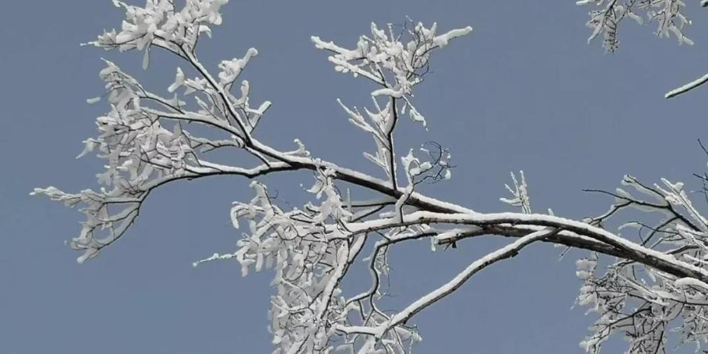 固原今年第一场雪 美好的事物值得等待