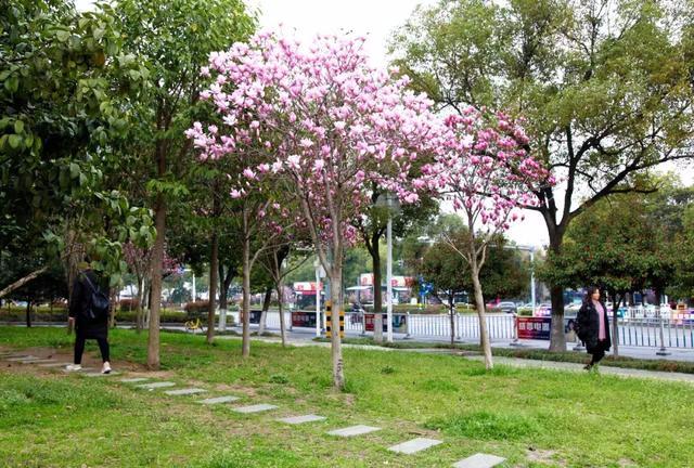 最是一年春好处!荆州城区赏花攻略出炉