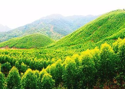 惠州绿色版图又扩大,去年造林近18万亩!
