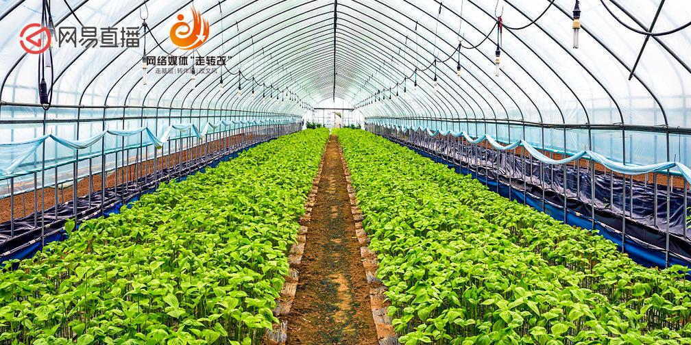 乌海靠绿色生态农业带农民走上致富路