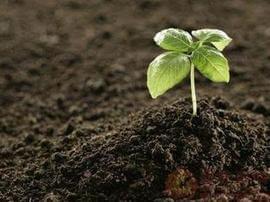 89项限时任务!明年底江门要建立土壤环境监管体系
