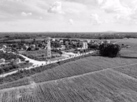 精准扶贫:芦竹种植绿了田野,美了村庄,富了村民