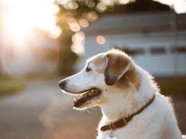 唐山地区偷狗案件高发 市民需提高防范意识