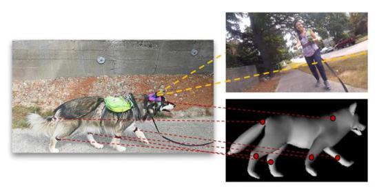 科学家创建犬类机器学习系统 带你感受狗狗的心灵世界