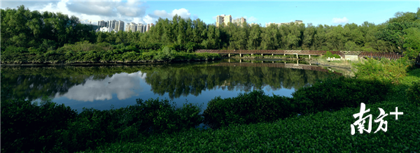 好消息!大亚湾红树林公园获评国家4A级旅游景区