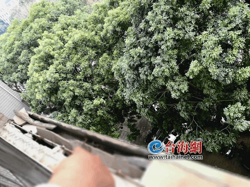 芗城区华府豪景公馆外墙水泥脱落数月未修