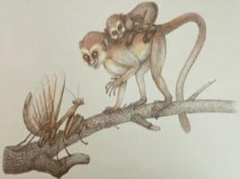 4500万年前人类远祖起源河南 新华社:动摇起源非