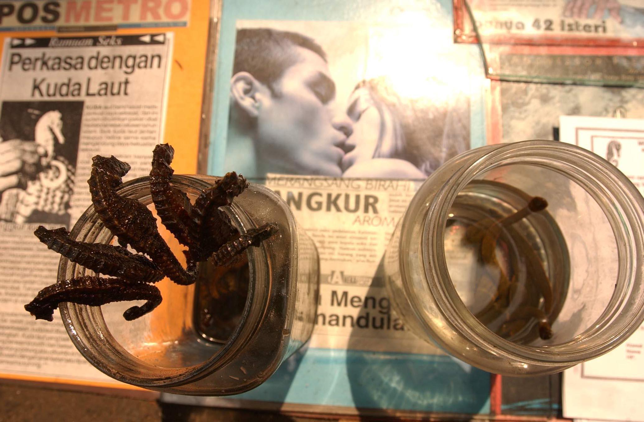 2003年7月16日,雅加达,据称有壮阳功效的海马和水蛭被小贩展示。 /CFP