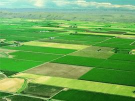 淄博市划定永久基本农田273.21万亩