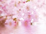 春风十里不如你 赏千年桃花 求一朝偶遇