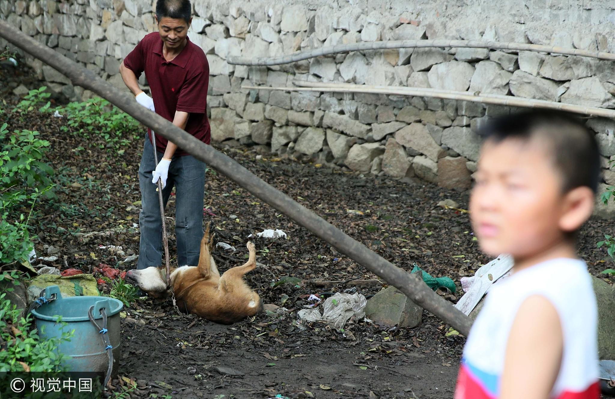 2016年08月04日,安徽庐江县矾山镇,打狗现场。前不久这里出现了一例狂犬病死亡案例/视觉中国