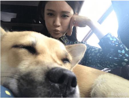 陈乔恩与狗狗合影