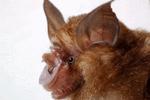 SARS病毒追击者15年后找到病源蝙蝠