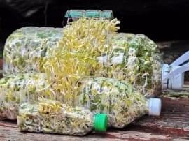 还花钱买什么菜?用个塑料瓶 蔬菜一年都吃不完!