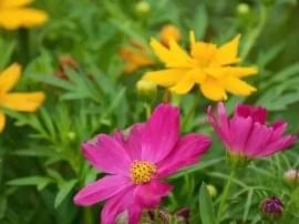 花已盛开,静待你来!佛山这里简直美哭了!