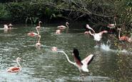 台湾彰化现禽流感疫情