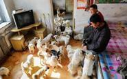 绝症男子收养400只流浪狗