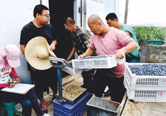 政府引导种植户建气调库储存鲜果