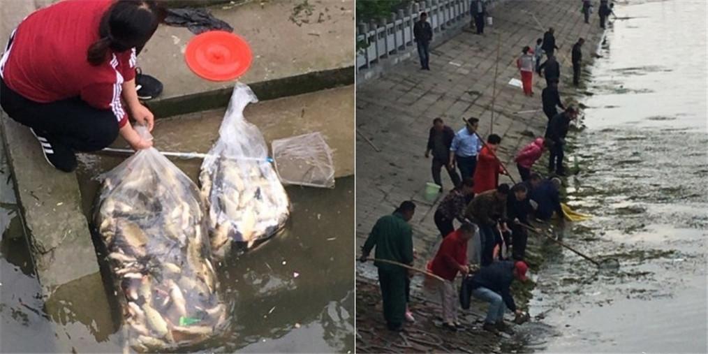 郑州东风渠现大量浮鱼 市民争抢捕捞