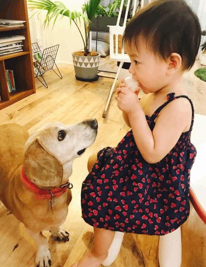 张梓琳晒女儿照晚安 胖妹吃点心呆萌惹小狗凝视