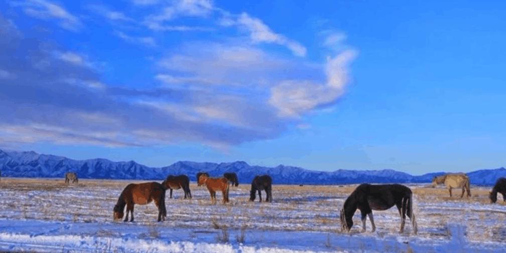 有一种美 叫做昭苏大草原的冬天