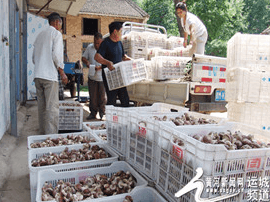 闻喜县志成种植专业合作社带动村民增收致富