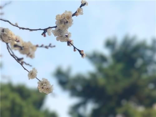 春城赏花季 花海如此醉人
