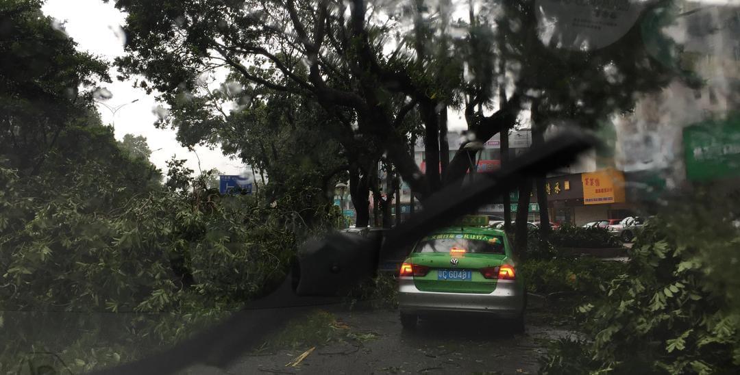 心疼!台风吹袭珠海 小车被树压被水泡