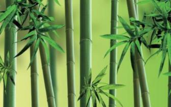 唐山市民为家中300余株竹子寻买主