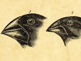看了关于进化论的这些最常见误解 你还信达尔文