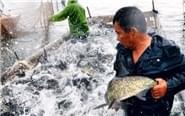 江西秋捕一天捞十万斤鱼
