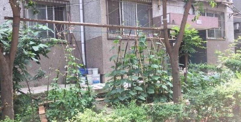 """小区公共绿地变""""菜地"""" 种满各种农作物"""