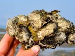 又是一年挖蛤季 曹妃甸最新最全挖蛤宝典
