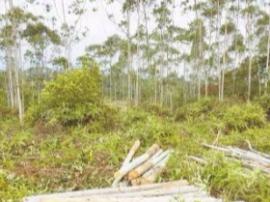 """木材商无证砍伐林木竟还放言""""随便报警"""""""
