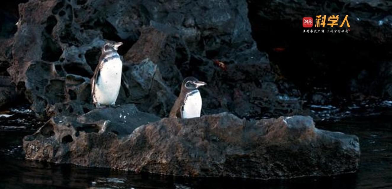 再探达尔文进化论灵感之源:加拉帕戈斯群岛