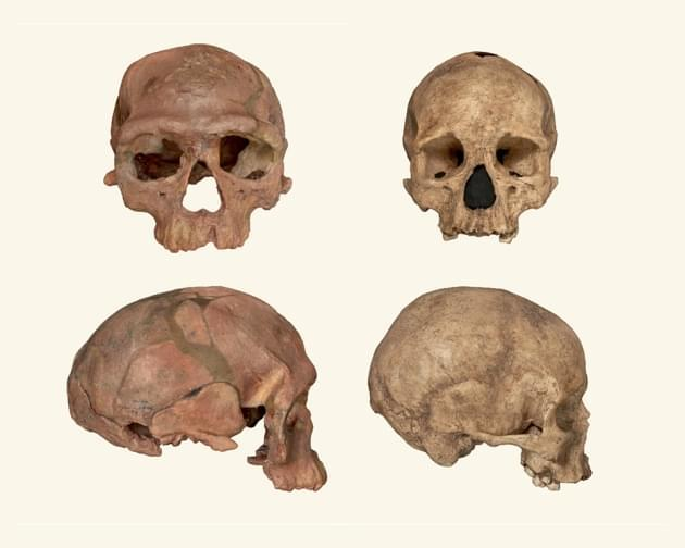 距今30-35万年,最早智人化石在摩洛哥出土