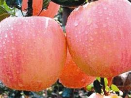 运城苹果直销中心盐湖店挂牌运营