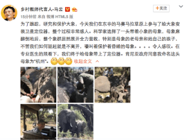 """有只远在非洲的大象,马云将它命名为""""杭州"""""""