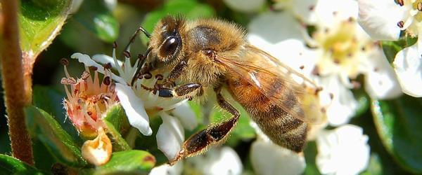 他自愿被蜜蜂蛰了四个月,终于知道哪里最痛