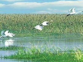 <b>房山将建湿地公园</b>